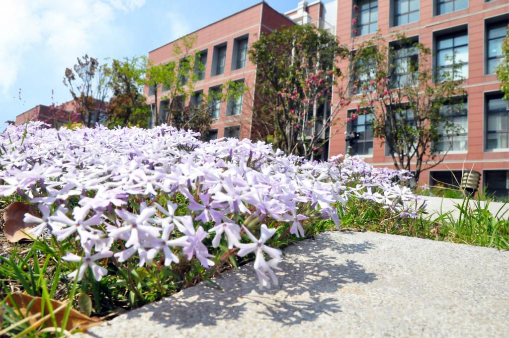 花开遍地春